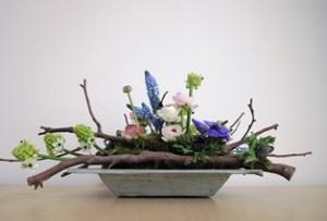 Bolbloemen en bloembollen