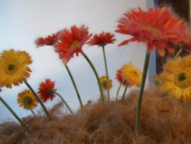 bloemen in steekbuisjes